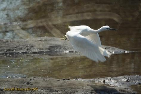 The Egret