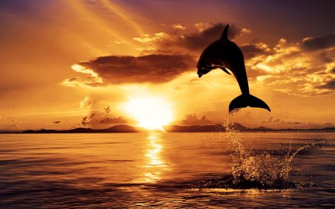 Dolphin-Sunset